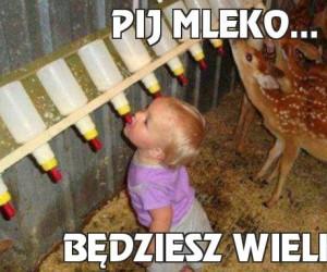 Pij mleko...