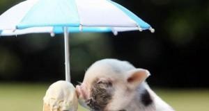Zwierzaki też lubią lody