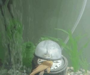 Masaż dla ryby