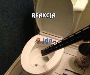 Reakcja na atak wielkiego pająka