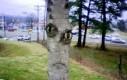 Drzewo z twarzą