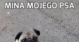 Mina mojego psa