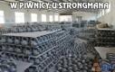 W piwnicy u strongmana