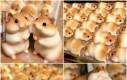 Małe chomiczki do jedzenia