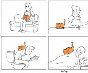 Wszędzie kot