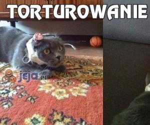 Torturowanie kota