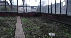 Koci skok