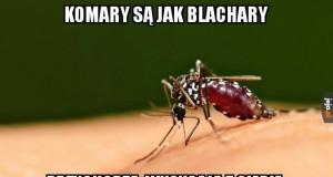 Gupie komary