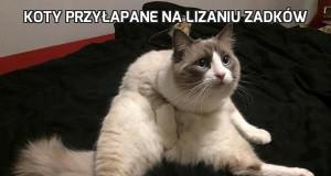 Koty przyłapane na lizaniu zadków
