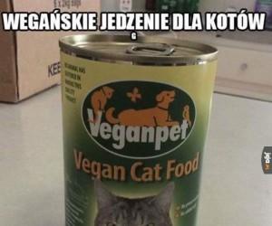 Kot na pewno jest zadowolony...
