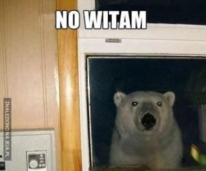 Niedźwiedź podglądacz