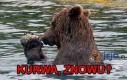 Komunikacja w świecie zwierząt