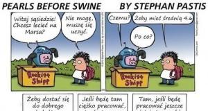 Propozycja świni w kartonie