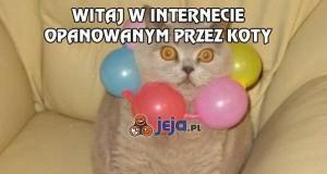 Witaj w internecie opanowanym przez koty