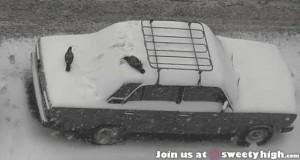 Wszyscy lubią się bawić na śniegu
