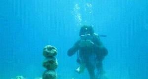 Władca rafy koralowej