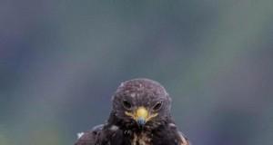Fotoszopki z orłem