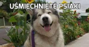 Uśmiechnięte psiaki