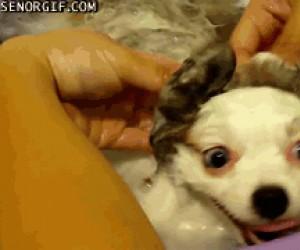 Jak ja, ku*wa, kocham kąpiel!