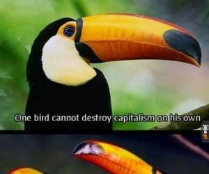 Jeden ptak nie zniszczy samodzielnie kapitalizmu, ale...