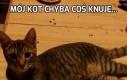 Mój kot chyba coś knuje...