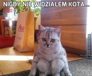 Nigdy nie widziałem kota...