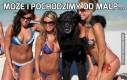 Może i pochodzimy od małp...