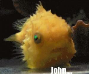 Kiedy zdałem sobie sprawę, że jestem rybą