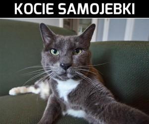 Kocie samojebki cz.2