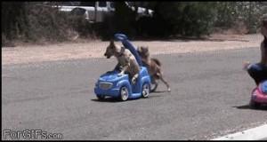 Ten pies oszukuje!