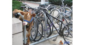Wielofunkcyjny stojak rowerowy