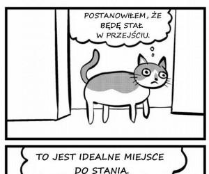 Pomysłowość kota