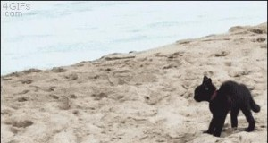 Kociak próbuje przestraszyć ocean!