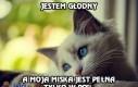 Problem każdego kota