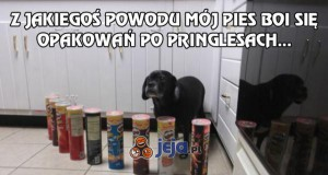 Mój pies boi się Pringlesów