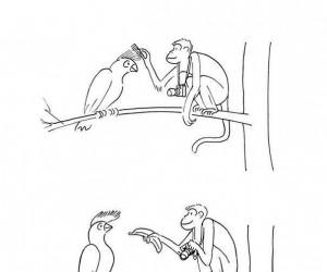 Jak sfotografować rzadki gatunek