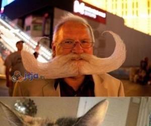 Taki tam koci wąsik