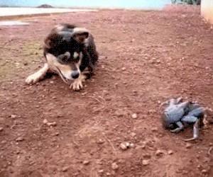 Biedny psiak. Krab nie chce się z nim pobawić...
