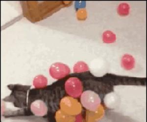 Balonowy pancerzu przybywaj!