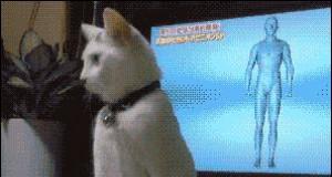 Co ja robię z moim życiem? Przecież jestem kotem!