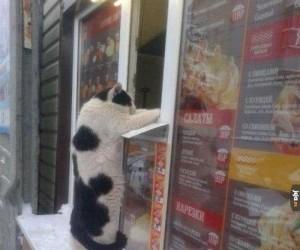 Kot zamawia chińszczyznę