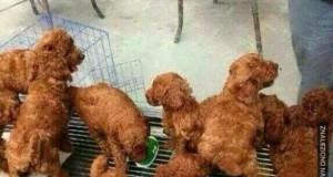 Wy też zauważyliście tutaj usmażonego kurczaka?