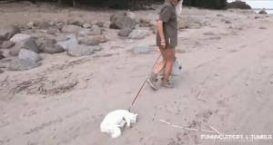 Ciężko czasem wyciągnać kota na spacer...