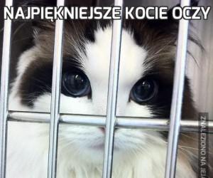 Najpiękniejsze kocie oczy
