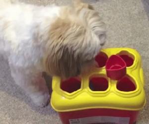 Kto jest mądrym psem?