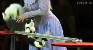 Pokazowa sztuczka kotełów