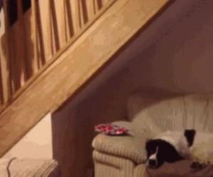 Najgorszy psi stróż