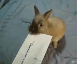 Pożyteczny królik