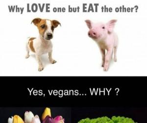 Oto jest pytanie