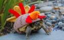 Żółwie wdzianka